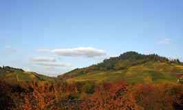 Vineyard hills fields in Kapperlodeck in Black Forest. Picture taken from road to Ottenhofen royalty free stock image