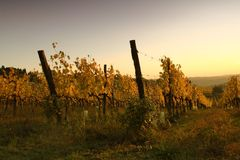 Vineyard on the hills of Florence in Tuscany during autumn sunset. View Vineyard on the hills of Florence in Tuscany / Italy during autumn sunset stock images