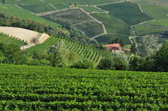 Vineyard and hills of the Langhe region. Piemonte, Italy Stock Photography