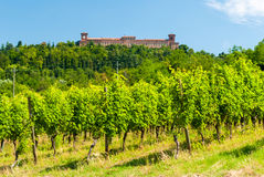 Vineyard in the hills of Oltrepò Pavese. Near Pavia; a castle in the background Royalty Free Stock Photo