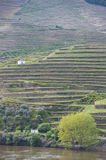 Vineyard hills in the river Douro valley, Portugal Stock Images