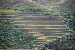 Vineyard hills in the river Douro valley, Portugal Royalty Free Stock Photo