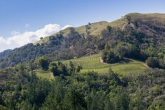 Vineyard on the hills of Sonoma County, Sugarloaf Ridge State Park, California royalty free stock photo