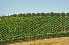 Vineyard Hills Royalty Free Stock Images