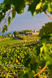 Vineyard in the hills of Toscane Stock Photography