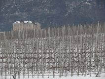 Vineyard on the hills of Trentino royalty free stock photography