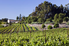Vineyard Home. Small vineyard lies on a hillside before a rural home in California wine country Stock Photos