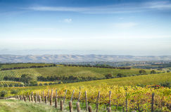 Vineyard and horizon in McLaren Vale, South Australia Royalty Free Stock Photography