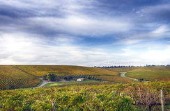 Vineyard and house in McLaren Vale, South Australia Royalty Free Stock Photos