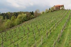 Vineyard House. In Styria, Austria Stock Image