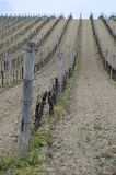 Vineyard. In Hungary, near the Balaton lake, Balaton felvidek Royalty Free Stock Photography