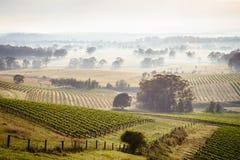 Vineyard. Hunter Valley vineyards at sunrise Royalty Free Stock Photo
