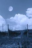 Vineyard i the night Stock Photo