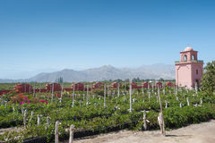 VIneyard - Ica, Peru. This image shows a vineyard in Ica, Peru Royalty Free Stock Photography