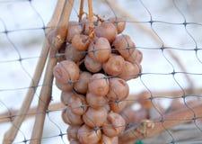Vineyard and Icewine Grapes Stock Photo
