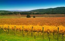 Free Vineyard In Autumn Stock Photos - 5235843