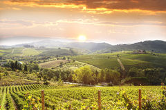 Free Vineyard In Chianti, Tuscany Royalty Free Stock Photo - 20861395