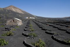 Free Vineyard In Lanzarote Royalty Free Stock Photo - 3295995