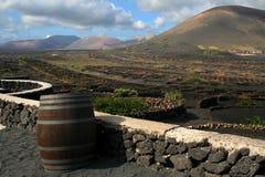 Vineyard In Lanzarote, Spain Royalty Free Stock Photo