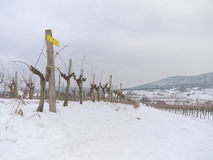Vineyard In The Winter Time Stock Images
