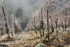 Free Vineyard In Winter Stock Photography - 1929502