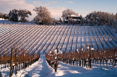 Free Vineyard In Winter Stock Photo - 49147110