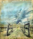 Vineyard In Winter On A Grunge Background Stock Photography