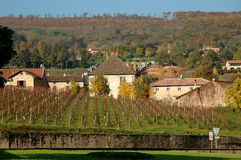 Vineyard infront of Farm in autumn. Rows of vine in front of a farmhouse in autumn landscape Stock Photography