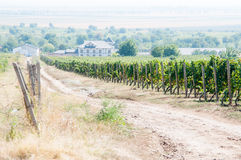 Vineyard and inn Stock Image