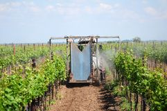 Vineyard irrigation Royalty Free Stock Photography