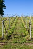 Vineyard irrigation system Stock Photo