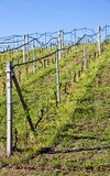 Vineyard irrigation system Stock Photos