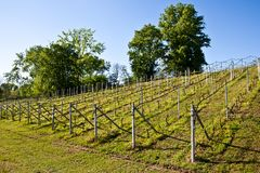Vineyard irrigation system Royalty Free Stock Photography