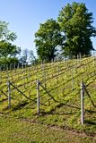 Vineyard irrigation system Royalty Free Stock Images