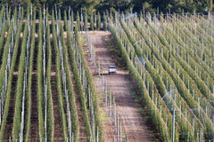 Vineyard. A vineyard with irrigation system Royalty Free Stock Photography
