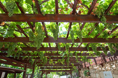 Vineyard on the island of Crete, Greece. Royalty Free Stock Photos