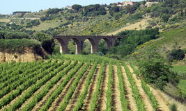 Vineyard on island of Sicily. High angle view of vineyard on island of Sicily with ancient viaduct in background, Italy royalty free stock photography
