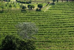 Vineyard Stock Images