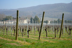 Vineyard italian fields wine Royalty Free Stock Image