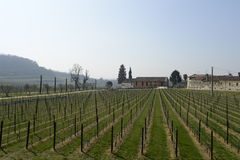 Vineyard italian fields wine Stock Images