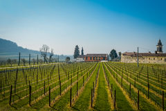 Vineyard italian fields wine Royalty Free Stock Photos