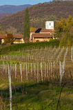 Vineyard on Italian hill Royalty Free Stock Photos