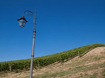 A vineyard in Italy Royalty Free Stock Image