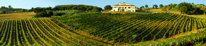 Vineyard in Italy. Beautiful vineyard in Italy at sunset Stock Photography