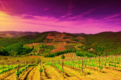 Vineyard in Italy. Hill of Tuscany with Vineyard in the Chianti Region at Sunset Royalty Free Stock Photo