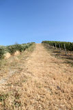 A vineyard in Italy Stock Photography