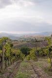 Vineyard in Italy, Tuscany Stock Photos