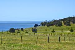 Vineyard on Kangaroo Island Stock Photo
