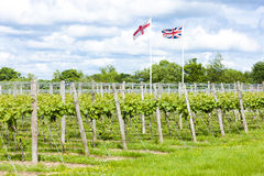 Vineyard, Kent, England Stock Photo