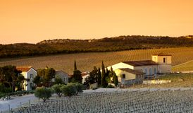 Vineyard in La clape hills, Languedoc country Royalty Free Stock Photography